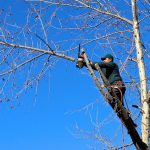 tree pruning charlotte nc - TreeBien Tree Care 2215 Winter Street Charlotte NC 28025 - (704) 207-0842
