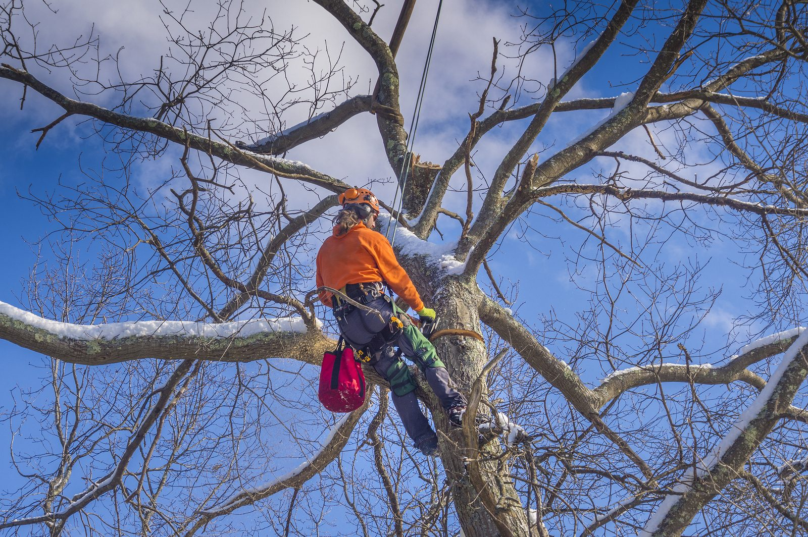 tree pruning charlotte nc