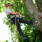 tree removal charlotte nc - TreeBien Tree Care 2215 Winter Street Charlotte NC 28025 - (704) 207-0842