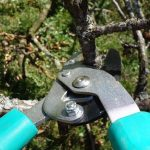 tree trimming charlotte nc - TreeBien Tree Care 2215 Winter Street Charlotte NC 28025 - (704) 207-0842